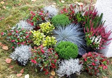 Grabbepflanzung Winter